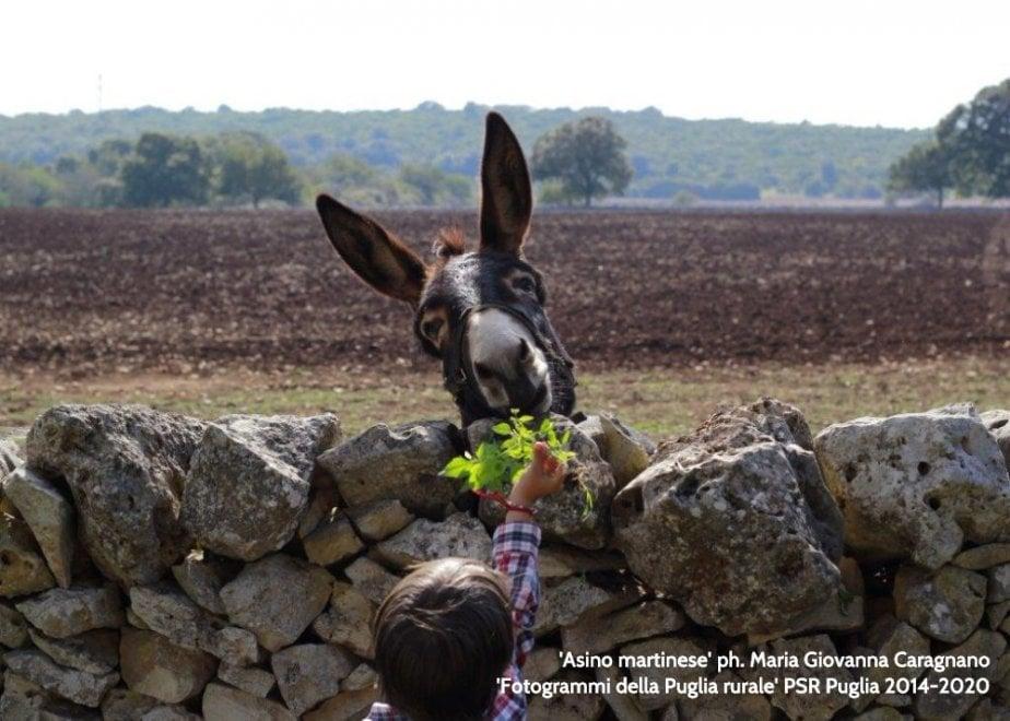 L'asino di Martina Franca e la Foresta umbra: le foto vincitrici del concorso 'Puglia rurale'