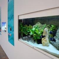 Bari, pesci tropicali e anfibi in mostra al porto: il terminal Crociere si trasforma in acquario