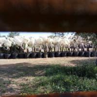 Gasdotto Tap, la procura di Lecce sequestra un'area del cantiere: dubbi