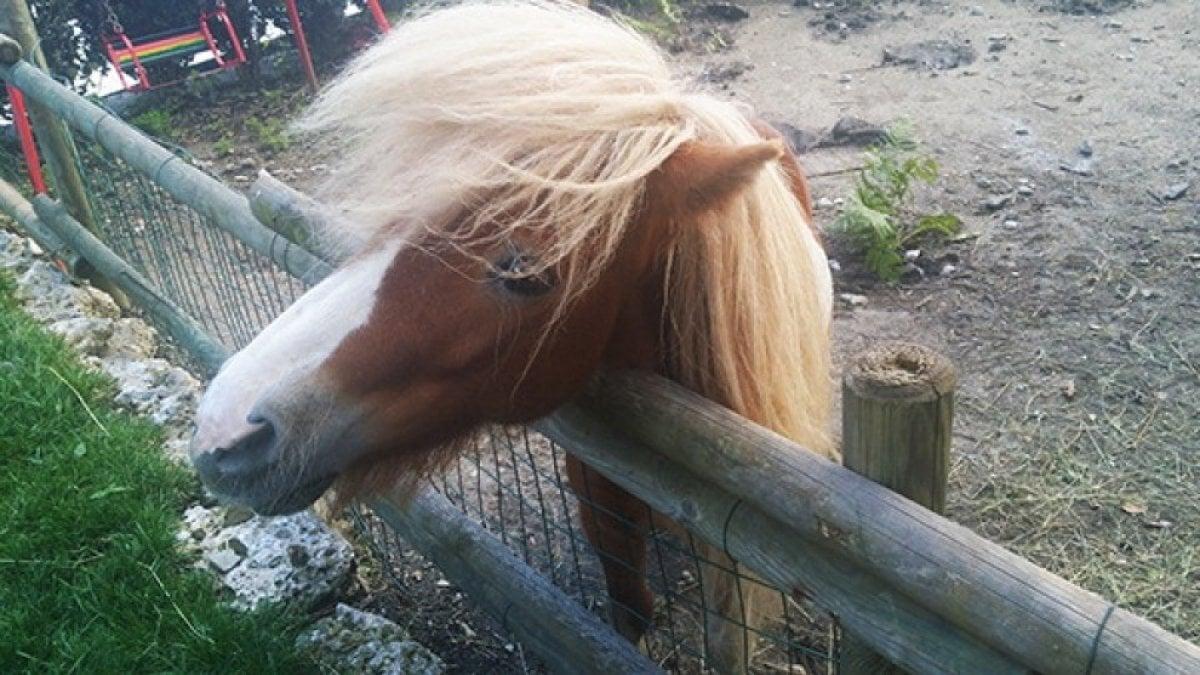 BRINDISI - Un pony, se tenuto in una stalla ricavata