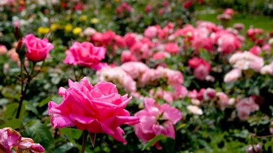 """Floricoltura, in Puglia un business da 185 milioni di euro. Coldiretti: """"Comprate fiori a chilometro zero"""""""
