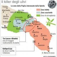 Xylella, fuori dalla zona rossa Alberobello e Massafra. I sindaci del Salento:
