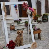 'Borgo in fiore' a Putignano: vicoli e balconi si colorano