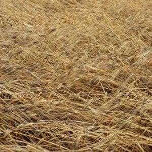 """Maltempo in Puglia, si contano i danni dopo i nubifragi: """"Colpiti campi di grano e ciliegie"""""""