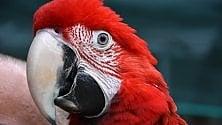 Asini, iguane e pappagalli  il rifugio degli animali