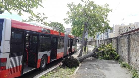 Maltempo, la pioggia flagella Bari: alberi sradicati e bagni vietati a Pane e pomodoro