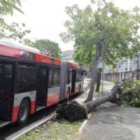 Maltempo, la pioggia flagella Bari: alberi sradicati e bagni vietati a Pane