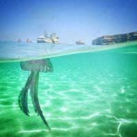 Salento, il caldo porta le meduse: i colori sono spettacolari