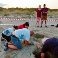 Matera, tartaruga depone le uova in spiaggia: non accadeva in Basilicata da 30 anni