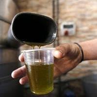 Puglia, la guerra dell'olio: