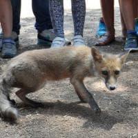 Taranto, la liberazione degli animali selvatici diventa una festa