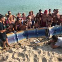 Salento, cento uova di tartaruga sulla spiaggia dei turisti: scatta l'operazione di salvataggio