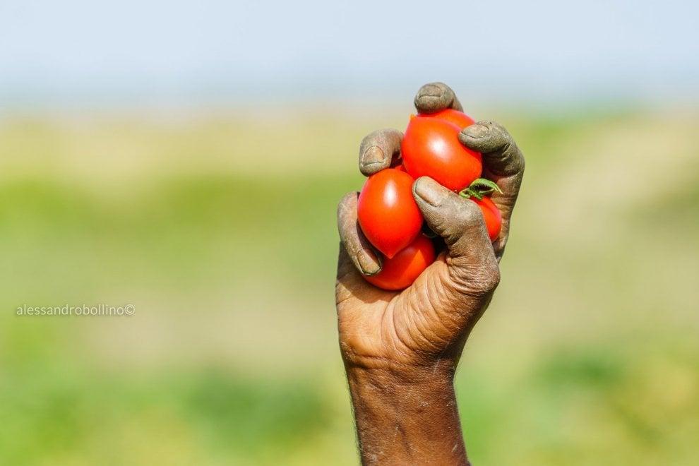 Salento, al via la raccolta 'sfrutta zero': la salsa di pomodoro è etica