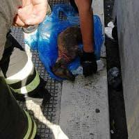 Bari, un cagnolino era rinchiuso nel cassonetto: lo hanno salvato i vigili