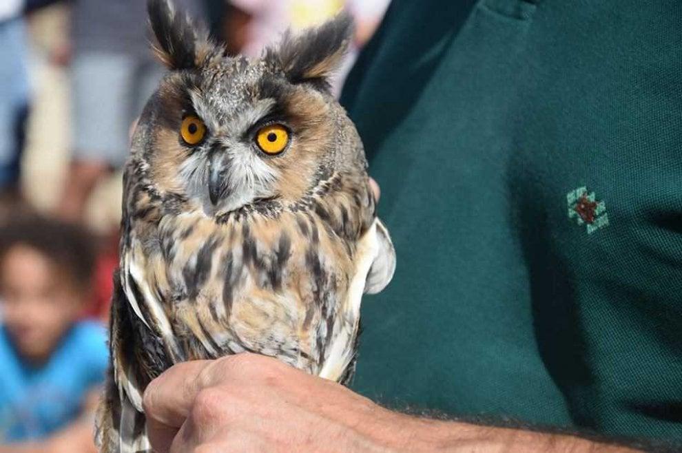 Taranto, gli animali selvatici tornano liberi dopo la cura