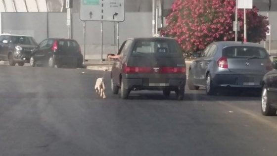 """Bari, con l'auto trascina il cane al guinzaglio """"per fargli sgranchire le zampe"""": denunciato"""