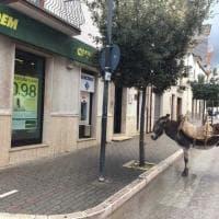 Gargano, parcheggia l'asino e va in banca: la foto diventa virale