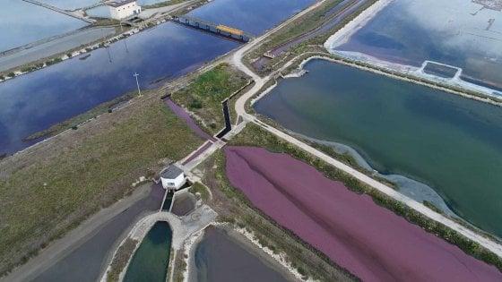 Un fiume rosso di liquami nell'area protetta delle saline di Margherita di Savoia: 5 indagati