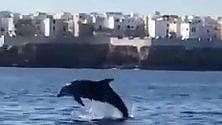 Delfini a Polignano la sorpresa dei turisti
