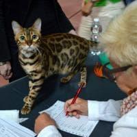 A Bari sfilano i gatti più belli del mondo