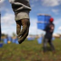 Foggia, arrestato caporale: aveva reclutato sei immigrati che sfruttava