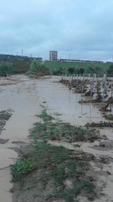 """Maltempo, l'allarme di Coldiretti: """"Terreni allagati, rischio idrogeologico"""""""