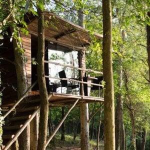 """Bari, le case sugli alberi nella pineta San Francesco: """"Saranno un rifugio per i turisti"""""""