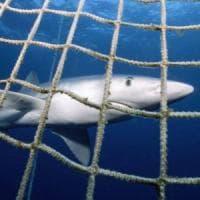 Monopoli diventa la prima città 'salva squali' del Mediterraneo: