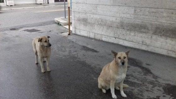 Andria, due cani attendono per due settimane davanti all'ospedale il loro padrone ricoverato