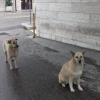 Andria, due cani attendono per due settimane davanti all'ospedale il loro