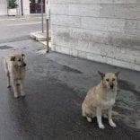 Andria, due cani attendono  per due settimane  davanti all'ospedale  il padrone ricoverato
