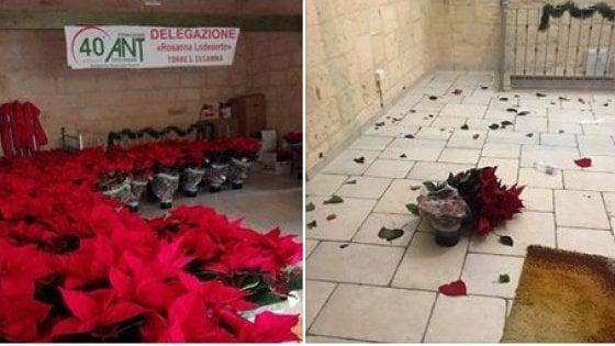 Brindisi, furto nella sede Ant: rubate le stelle di Natale p