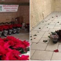 Brindisi, furto nella sede Ant: rubate le stelle di Natale per la raccolta benefica