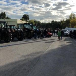 """Xylella, nel Barese tremila agricoltori in piazza con i trattori: """"Il governo intervenga"""""""