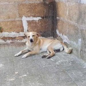 """Brindisi, cane ucciso in strada a fucilate. La proprietaria: """"Chi ha visto denunci"""""""
