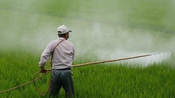 Lecce, l'Università sviluppa un naso chimico per 'fiutare' la presenza di pesticidi