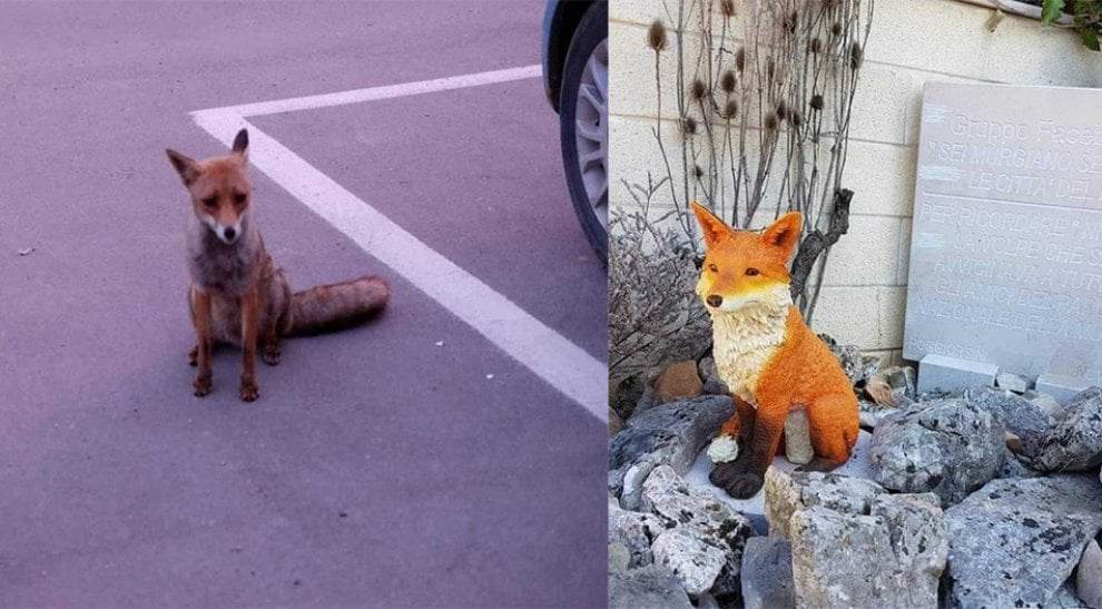Una volpe per amica, i cittadini di Poggiorsini finanziano una statua per ricordare 'Ninett'