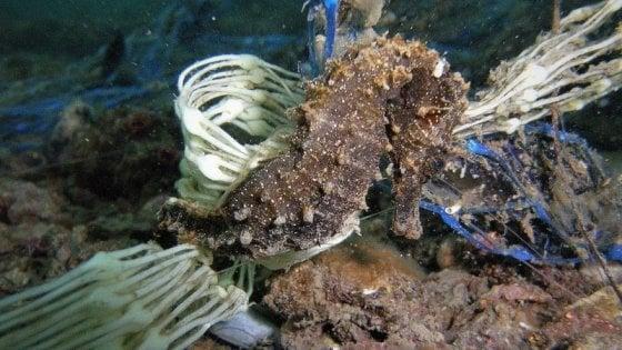 """Plastica in mare, i lidi pugliesi dicono stop: """"In spiaggia solo stoviglie biodegradabili e buste di carta"""""""