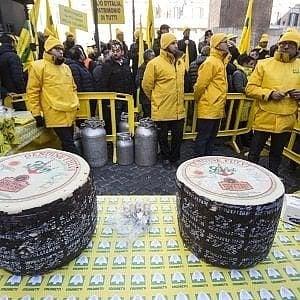 """Pecorino day, Coldiretti Puglia: """"Addio a 30mila pecore"""""""
