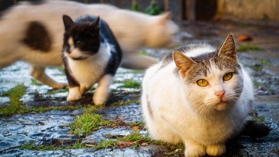 """""""Troppi gatti sbranati dai cani randagi"""": a Bari è allarme per le colonie feline"""