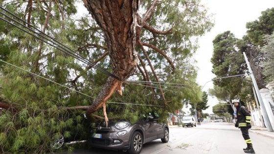 Maltempo in Puglia, vento a 40 nodi. A Bari un grosso pino cade su un'auto: un uomo salvato dai cavi del filobus