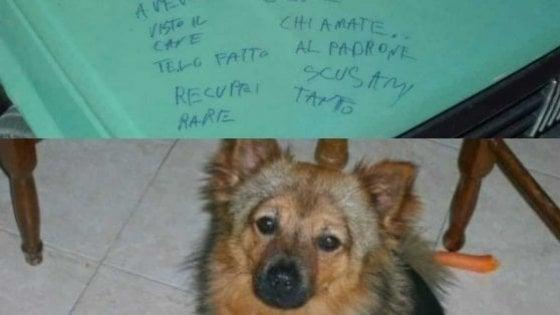Bitonto,  storia a lieto fine per Chicco: il cane rubato insieme all'auto è tornato dal padrone