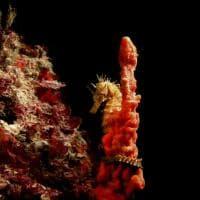 La Puglia delle meraviglie è sott'acqua: le visioni del sub-fotografo