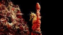 Meraviglie sott'acqua  visioni del sub-fotografo