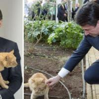 Il premier Conte con il gatto Merlino, le foto scatenano il web