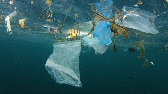 Plastica in mare, i pescatori la raccolgono: 1.200 chili in cinque mesi tra le Tremiti e Molfetta