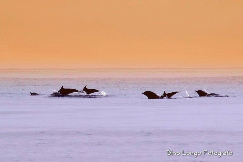 I delfini nel mare di Otranto, c'è tutta la magia del Salento