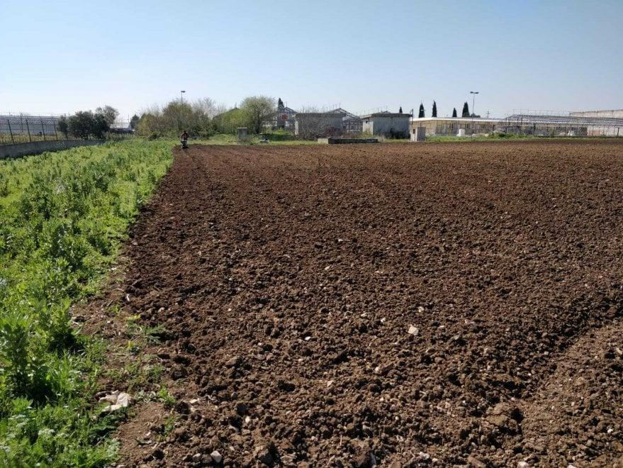 Sindaco e consiglieri per la semina della canapa nel campo di agricoltura sostenibile ad Acquaviva