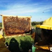 """A spasso tra gli alveari: a Bari apre un apiario con 200mila insetti. """"Così si impara a..."""