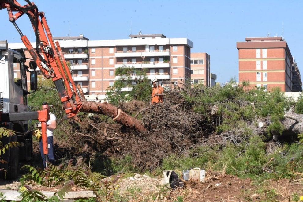 Bari, abbattuto l'albero secolare all'interno della Caserma Rossani. Inutili appelli e proteste